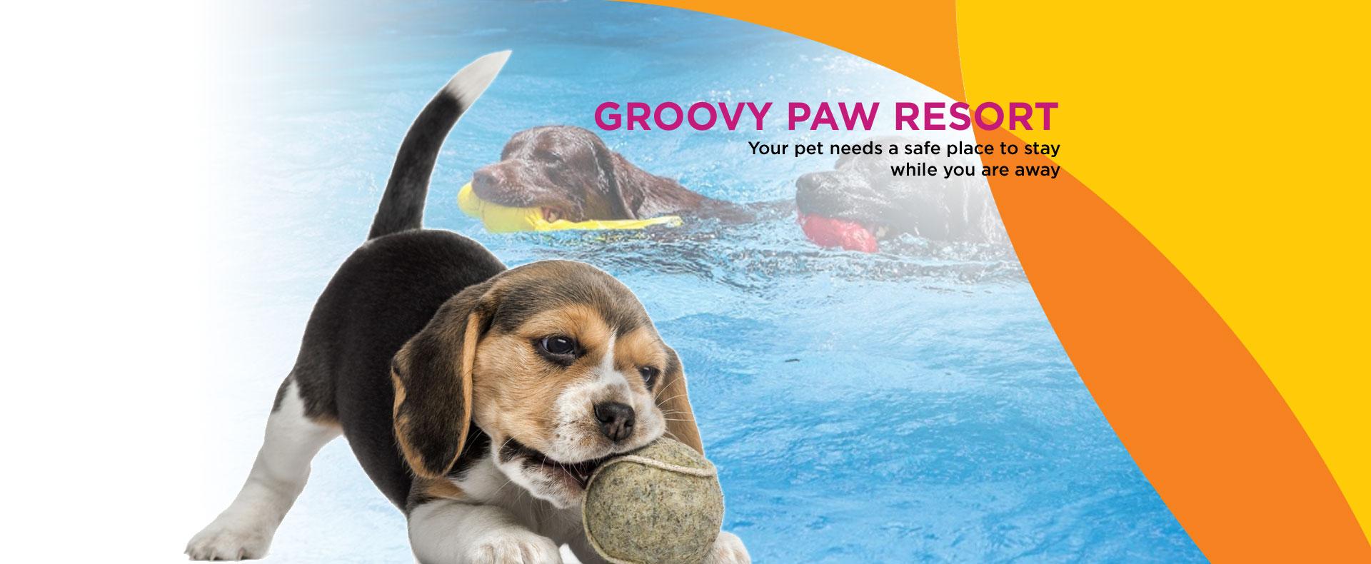 groovy paw resort