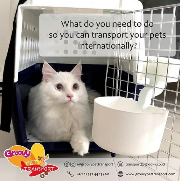 Groovy Pet Transport