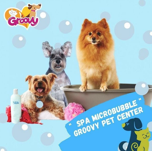 Groovy Pet Center